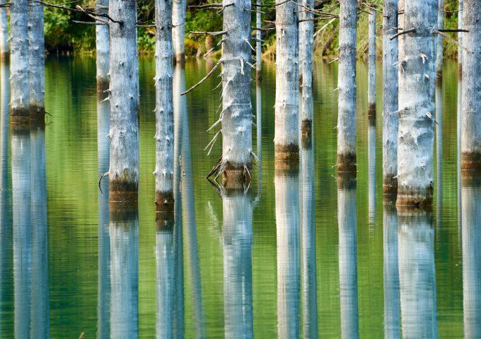 foresta sommersa di kaindy