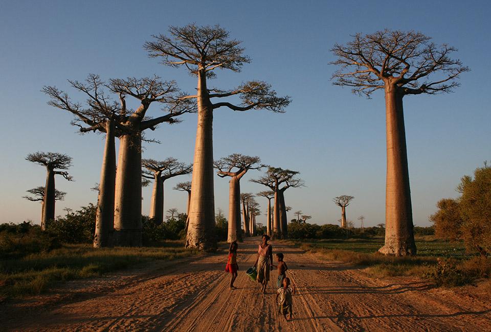 Madagascar, il viale dei baobab